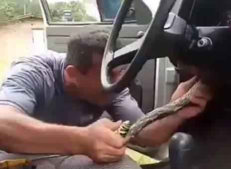 افعى داخل سيارة ، شاهد ماذا حدث !