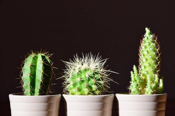 نباتات تجذب الطاقة السلبية..اخرجيها