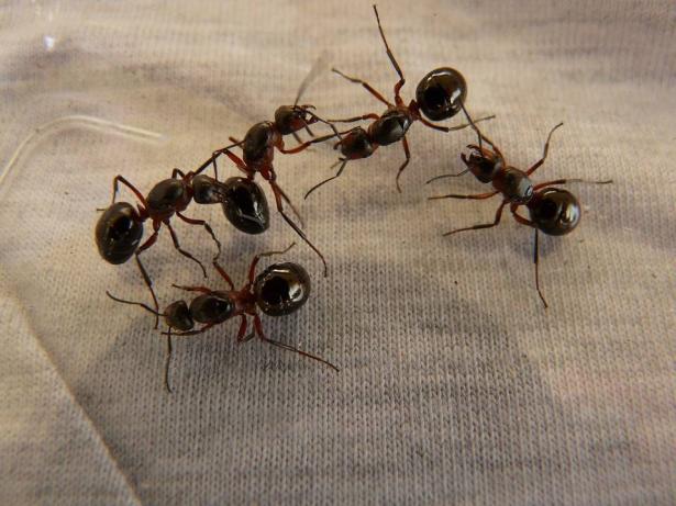 مروع..ازالة 60 نملة من عين فتاة في الهند
