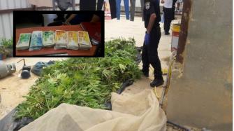 ضبط 210 كغم من المخدرات ومبلغا ماليا كبيرا في منزل ببلدة قصر السر في النقب