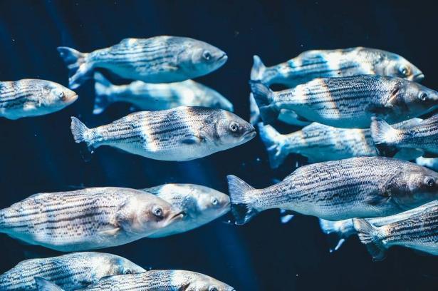 كيف يتم غش السمك؟ وكيف تشتريه؟