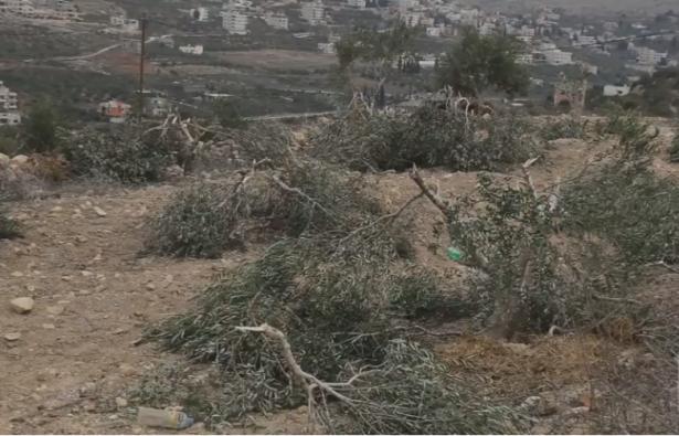 قطع ألفي شجرة في الضفة خلال أقل من شهرين