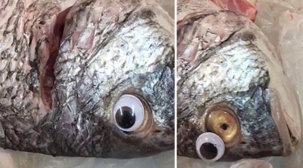 طريقة جديدة للغش.. أسماك بعيون بلاستيكية تثير ضجة في الكويت