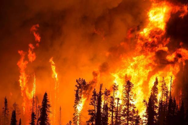 حريق بشجرتي تمر في طبريا