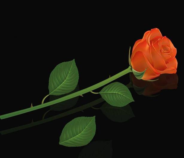 متى وكيف عليك إهداء الورود والأزهار؟