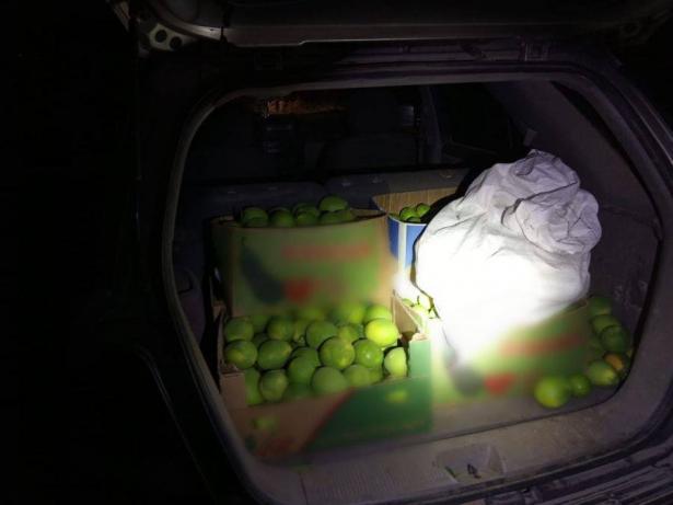 اعتقال مشتبهين من طمرة بسرقة محاصيل زراعية