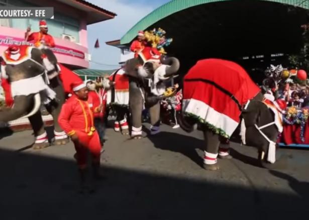 بالفيديو... فيلة بزي