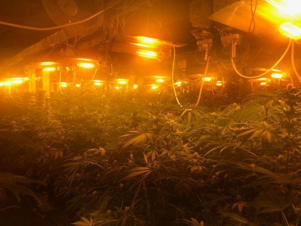 طمرة: ضبط معمل لتنمية نباتات المخدرات داخل بناية سكنية