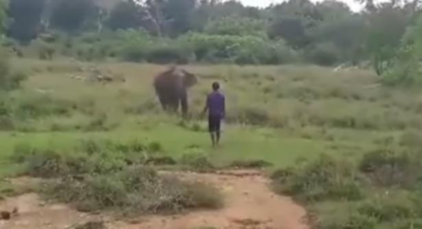 شاهد .. فيل بري ضخم يسحق رجلا حاول تنويمه مغناطيسيًا