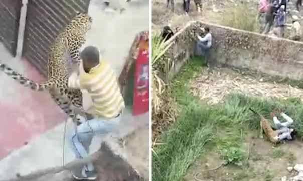 بالفيديو... فهد يهجم على قرية في الهند