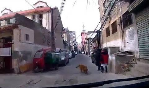 بالفيديو... كلب وفي ينقذ صديقه من الموت بطريقة ذكية