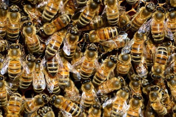 تقرير موسع: عالمنا ينتظر كارثة.. والحشرات السبب