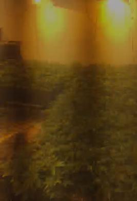 شاهد: الشرطة تضبط معملا لتنمية المخدرات يحوي 3 آلاف شتلة في حيفا