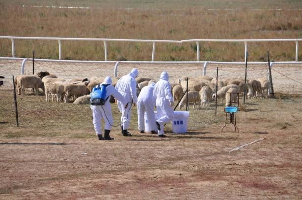 بعد إصابة فحماوي بالحمى المالطية: البلدية تحذر من تفشي المرض وتوصي بالوقاية
