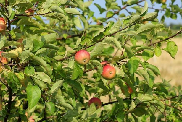توقعات بارتفاع أسعار فاكهة الصيف بسبب تضرر المزروعات، شاكوري تتحدث للشمس