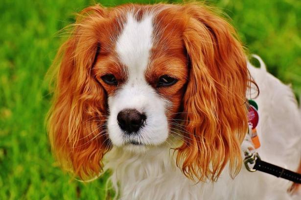 الشرطة اليابانية تمنح كلبة شهادة تقدير.. والسبب!