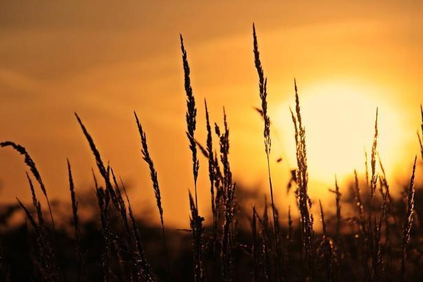 الراصد الجوي للشمس: الحرارة تنخفض حدتها اليوم مساءً
