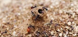 بيت النمل