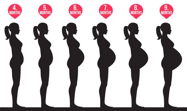 متى يظهر البطن للحامل