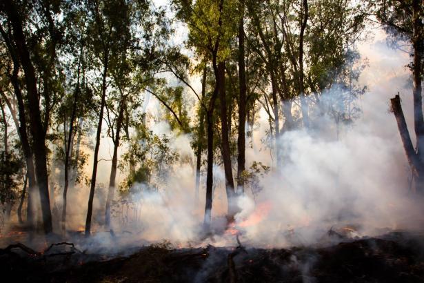 الحرائق في استراليا تسبب اضرارًا كبيرة ونفوق لحيوانات مهددة بالانقراض