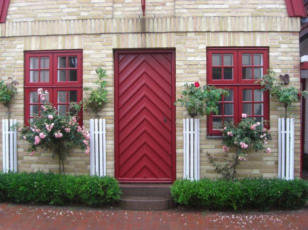 النباتات المنزليّة ودورها في إضفاء الحيوية والجمال في المنزل