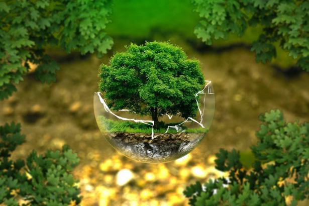 خمسة أمور للحفاظ على البيئة - تعرّف عليها