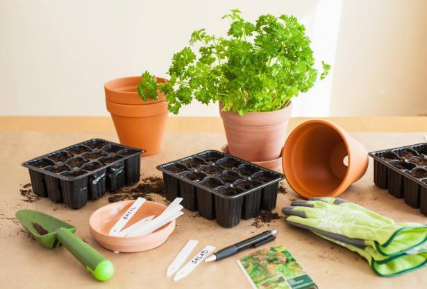 نصائح للزراعة البيتية خلال فترة الحجر  المنزلي - أيوب شلة