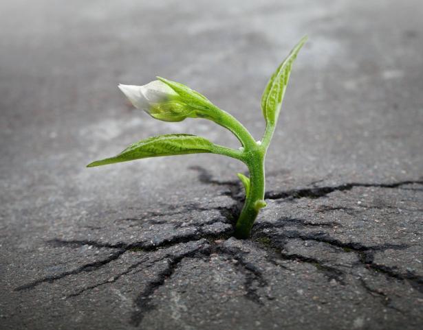 فرص جديدة في ظل الأزمة: تنمية قدرات ومبادرات جديدة