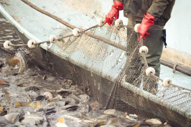 وصلت المحادثات بين منظمة الصيد البحري ووزارة الزراعة، لطريق مسدود