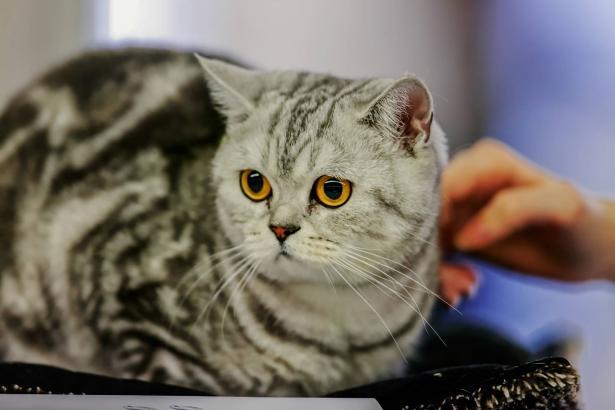 في يوم القطط العالمي: ما هي طرق التربية السليمة؟
