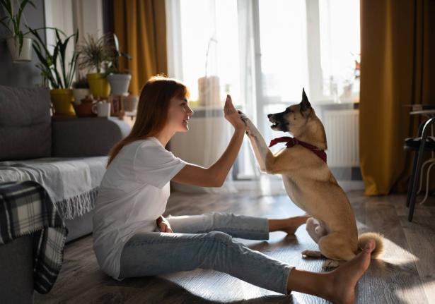 هل ترغب في اقتناء حيوان أليف في المنزل؟ إليك هذه النصائح!