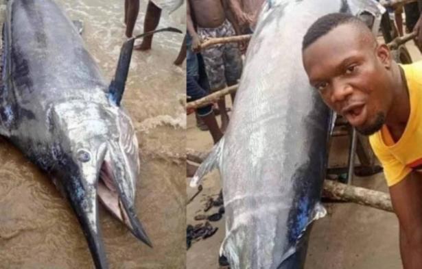 اصطاد سمكة بقيمة 2.6 مليون دولار وأكلها برفقة أصدقائه - شاب نيجيري يضيع