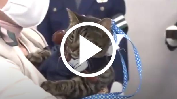 قطة تنقذ مسن وتُعين كـ