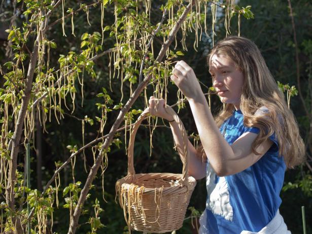 الكذبات الأشهر في تاريخ الأول من نيسان: أشجار تثمر معكرونة سباغيتي!
