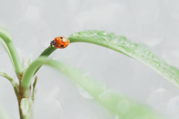 ما هي اكثر الحشرات ظهورًا هذه الفترة في بلادنا