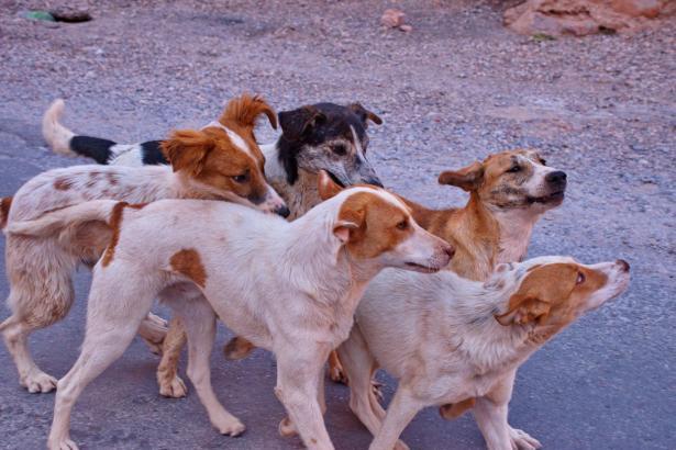 الصحّة الإسرائيلية تحذّر من داء الكلب: حيوانات مصابة في منطقة الشمال